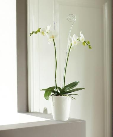 Un ghiveci e haina pe care o imbraca o planta, tocmai de aceea trebuie sa alegi ghiveciul care o avantajeaza. orchideco twist - ELHO - Beautiful living