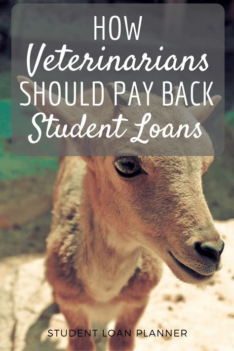 With such high debt loads, optimizing the student loan repayment choices for veterinarians to find the cheapest one is highly important for each individual.