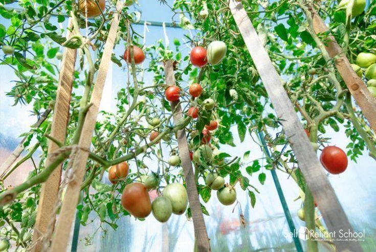 vegetable garden ideas philippines #Vegetablegardenideas ...