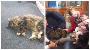 2x His Size, Missing Family Cat Is Found A Year Later Living Inside A Pet Food Warehouse