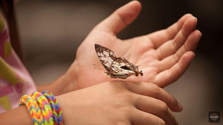 白鮑溪、荖溪 蝴蝶