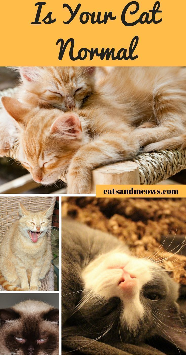 How To Know If Your Cat Is Normal Cat Behavior