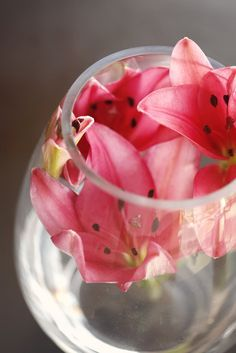 Cup of water melon flowers
