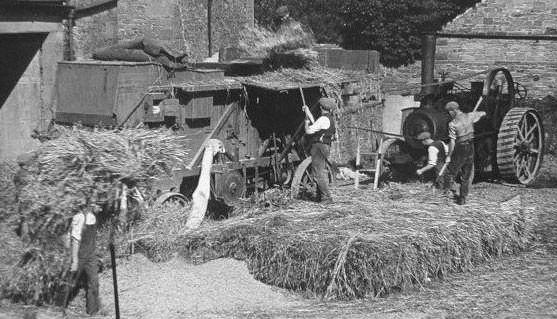 Men loading corn into treshing machine