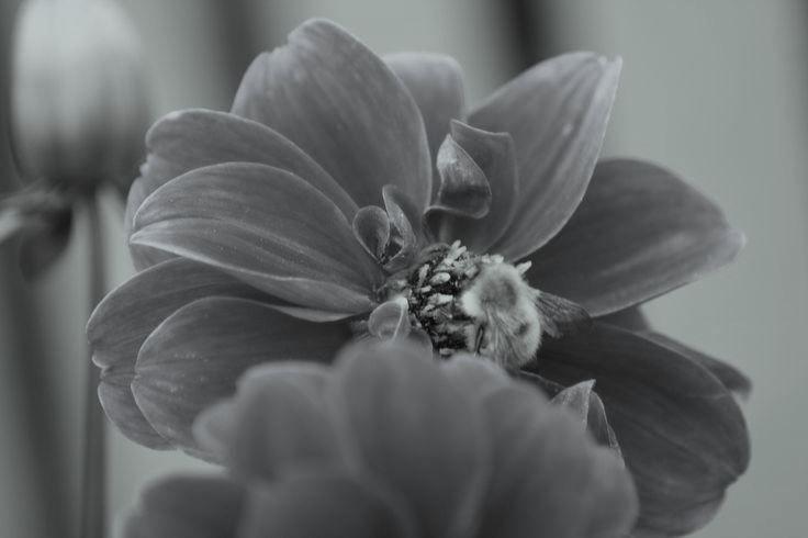 Grey moments1