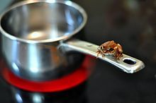 A frog sitting on the handle of a saucepan, which is sitting on an electric hob, which is glowing red.