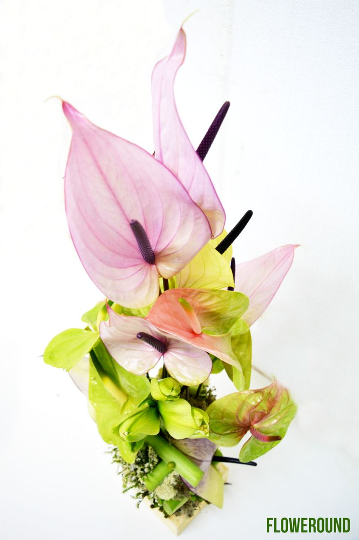 Anthurium and Allium