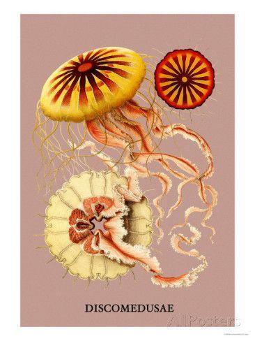 Jellyfish: Discomedusae Premium Poster