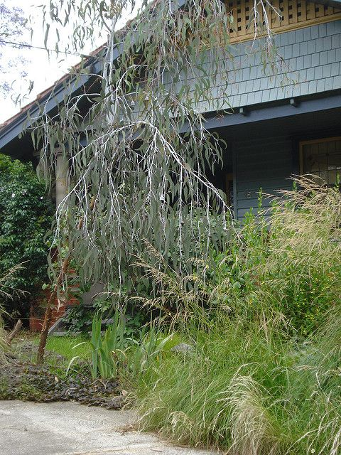 Ballynoe Cottage: Garden Inspiration: Helen's Garden