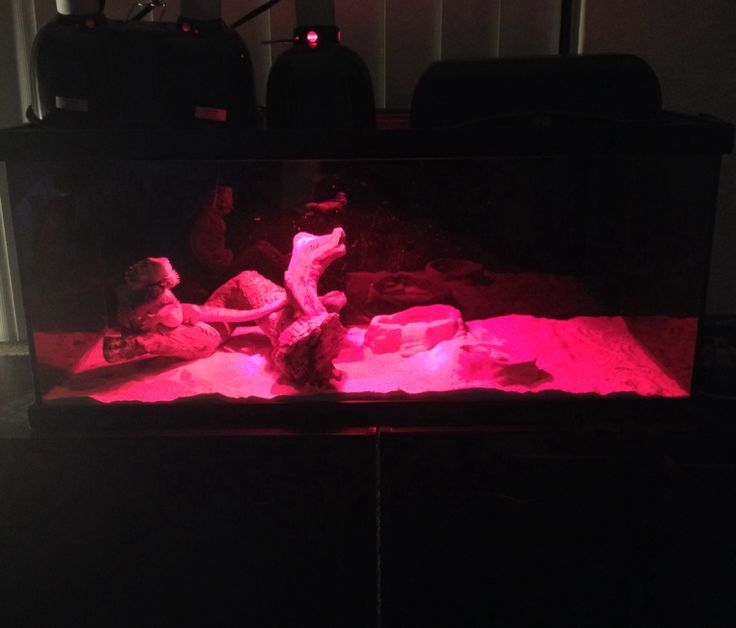 Current enclosure with night heat lamp