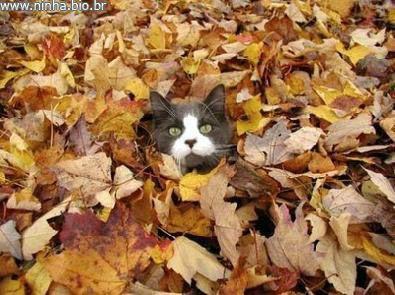 gato escondido nas folhas secas