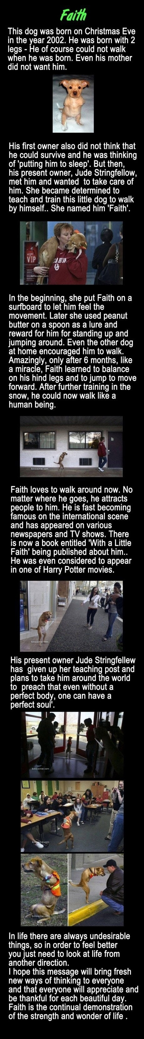 Faith - the dog with no legs