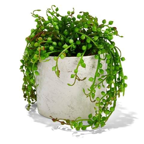 Marble Look Pot with Plant