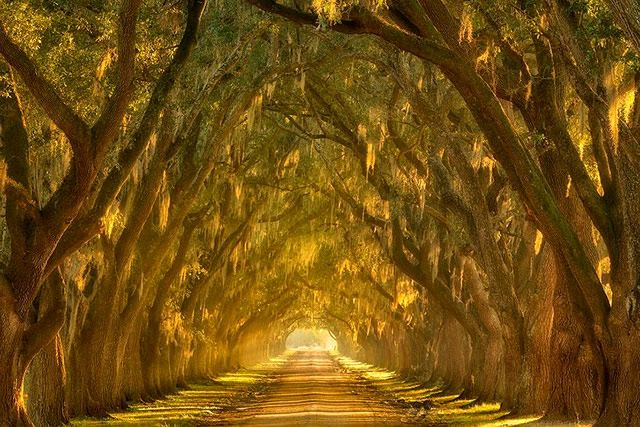 20 túneis incríveis feitos de árvores que existem pelo mundo afora