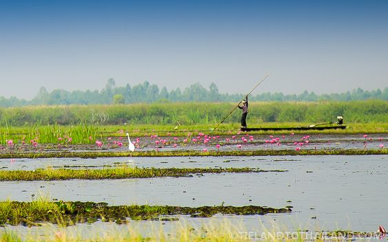 This man is slowly making his away across the Red Lotus Sea in Udon Thani, Thailand | tielandtothailand.com