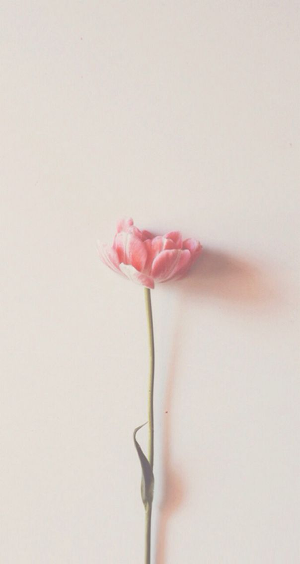 Pink Flower|Wallpaper  Credits to the original owner.