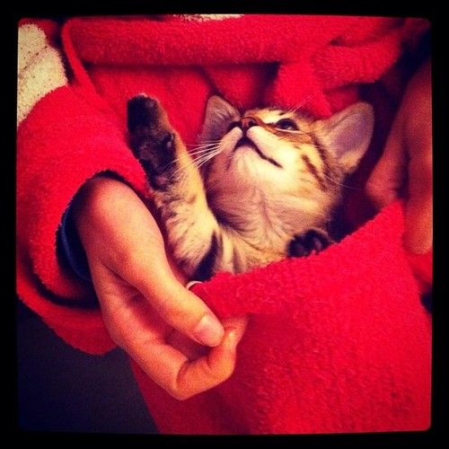 Cats of Instagram   Daily Doses of Original, Cute, Cat Pictures