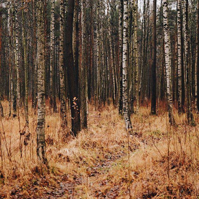 Уютные дождливые дни.🍁🍂🍁Cozy rainy days. #vsco #vscocam #vscorussia #autumn #fall #nature #landscape #forest #wood #travel #livefolk #liveautentic  #wild #liveadventurously #adventure