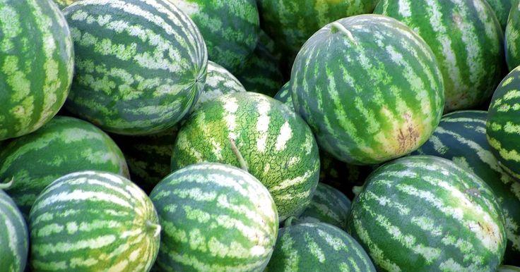 O cultivo da melancia quadrada. Quase todo mundo lembra de comer melancias durante piqueniques e churrascos de verão. Essas grandes frutas possuem o formato perfeito para serem comidas com as mãos. No entanto, os agricultores que empacotam melancias para transporte descobriram que elas não cabem muito bem em caixas. A solução descoberta foi cultivar melancias quadradas.