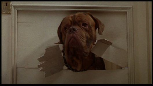 turner and hooch | FILM: Turner and Hooch (guest post by Jan)