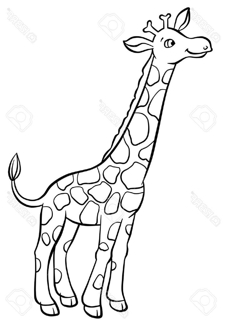 giraffe drawing easy cartoon very zirafah draw drawings girraffe desenho desenhar pencil melukis cara sketches facil animado desenhando girafas esbocos