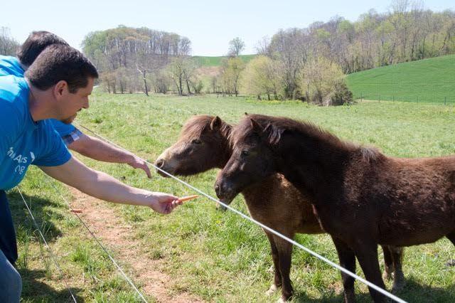 #mini #ponies #madisonfields #volunteer #farmlife