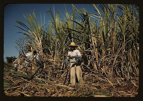 Puerto Rico People | Sugar cane worker in the field, vicinity of Guanica, Puerto Rico, 1942 ...