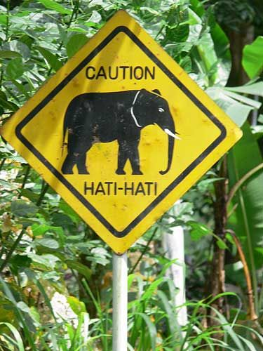 Official Balinese road sign (hati-hati = caution)