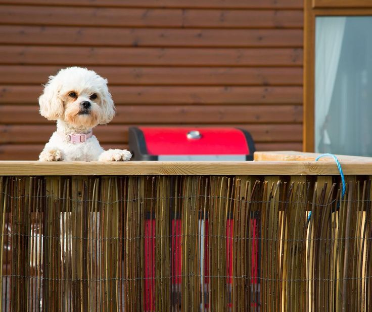 Pet friendly lodges with gated decking.Great coastal walks, with the beach pet friendly all year