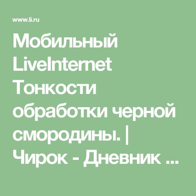 Мобильный LiveInternet Тонкости обработки черной смородины. | Чирок - Дневник Чирок |