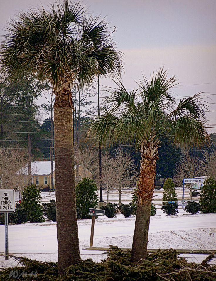 7 Best 173 Acres Land For Sale Hampstead North Carolina