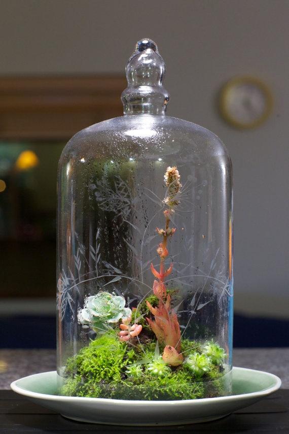 Bell jar terrarium