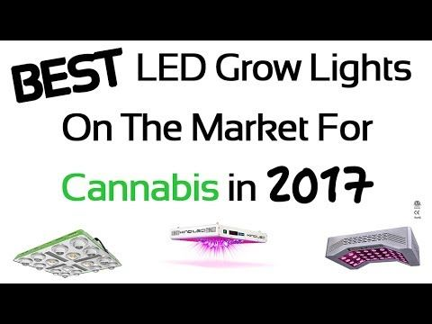 Luxury  Best LED Grow Lights for Cannabis in Review and Guide for Indoor Gardening