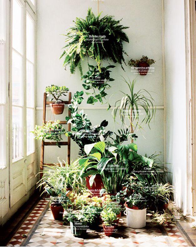 Stap 1. Haal planten in huis!
