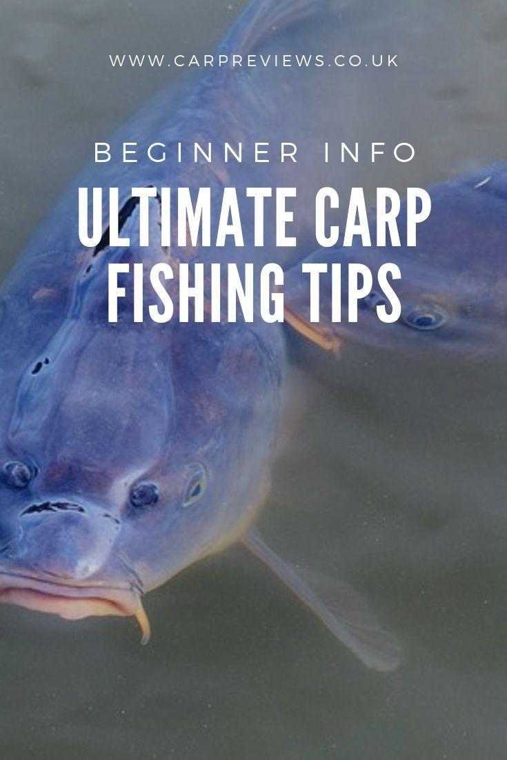Best Carp Fishing Tips Carpfishing Carp Carp Fishing Lake Fishing Tips Tips In 2020 Carp Fishing Tips Fishing Tips Lake Fishing
