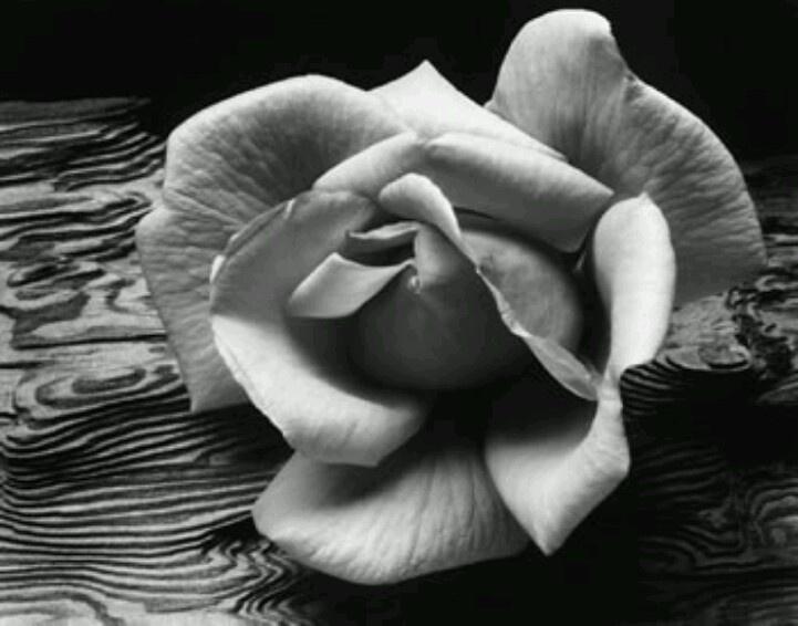 Ansel Adams<3