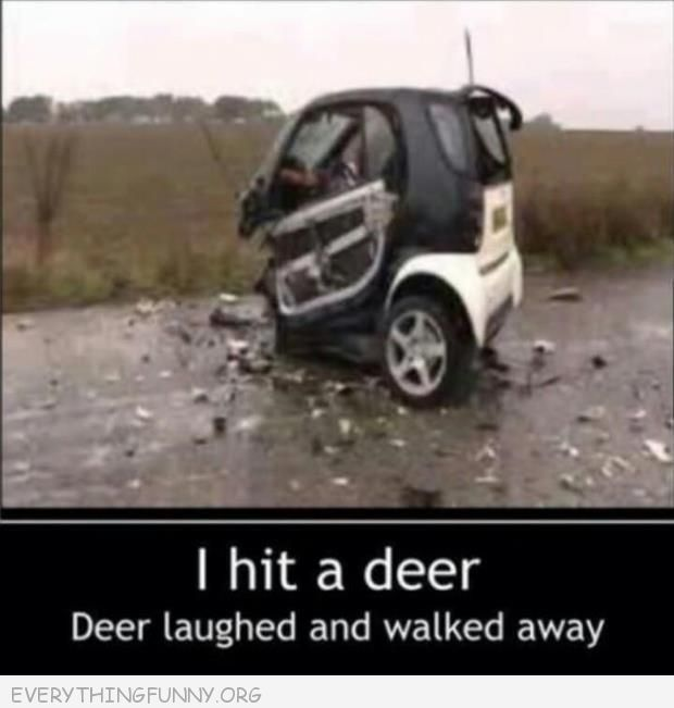Tiny Car I Hit A Deer Deer Laughed And Walked Away
