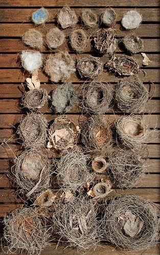 Collection of nests.  My children know that I love nests and in the winter will bring me nests like in the summer they bring me wildflowers.  I have a lovely shelf of nests in my antique secretary.  Fun!