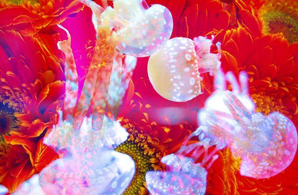 すみだ水族館にて蜷川実花がプロデュースを手掛ける「蜷川実花 × すみだ水族館 クラゲ万華鏡トンネル」が開催