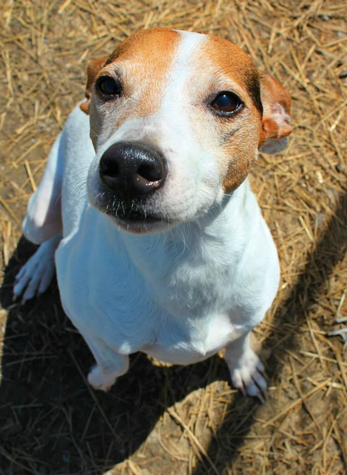 Adopt Kennel 12 on Adoption, Home and Russell terrier