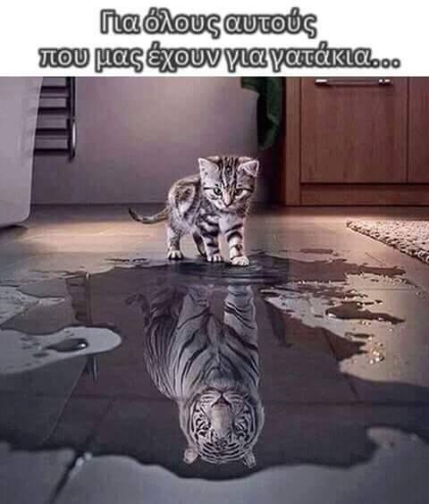 Η γάτα που νόμιζε πως ηταν  λιοντάρι!