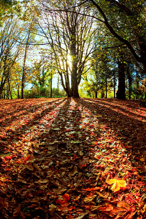 Autumn in the botanical gardens, UACH, Valdivia © Charles Brooks