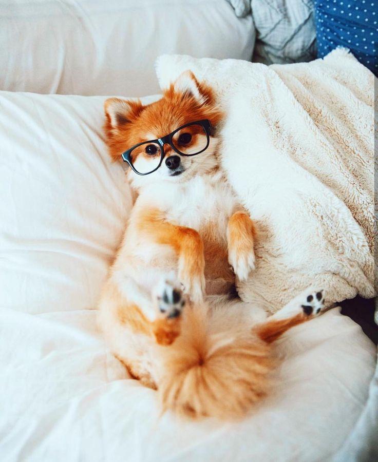 A pomeranian-fox cutie :) http://ift.tt/2ihwOql