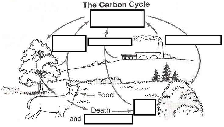 wizer.me free interactive carbon cycle, Biology, cycles, blended worksheet - The Carbon Cycle by teacher