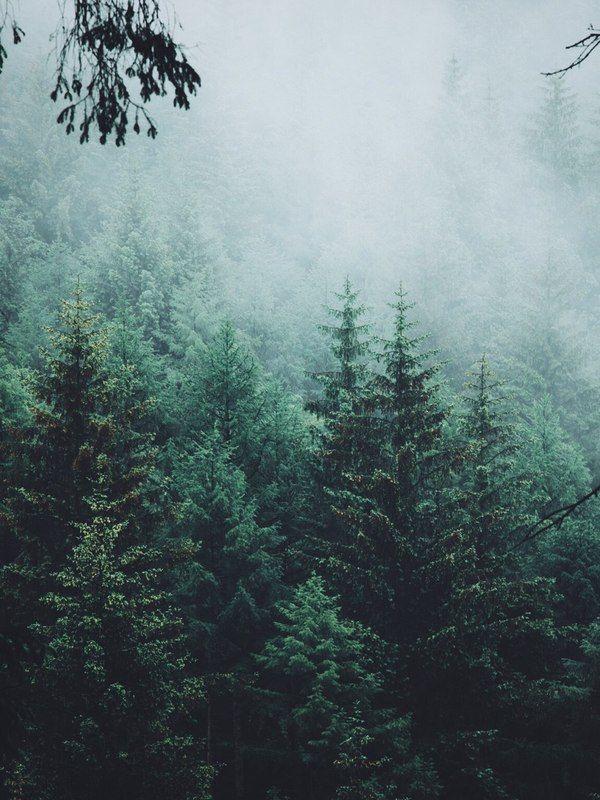 Туманный лес, в память об ушедшем лете... лес, туман, Фото, атмосферно, Природа…
