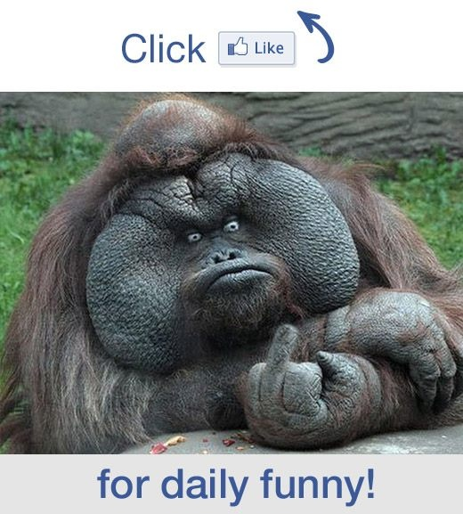 10 best images about gorillas on pinterest diana