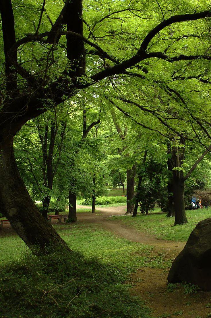 A nyárban az egyik legjobb, hogy rengeteget lehetünk a szabadban, számos programot szervezhetünk, hogy kiszabaduljunk otthonról. Még az olvasgatás is egészen másképp esik egy parkban vagy kertben a fák alatt, esetleg takarón heverve.Mivel tetszett Önöknek a kedvenc budapesti pihenőimetésa…