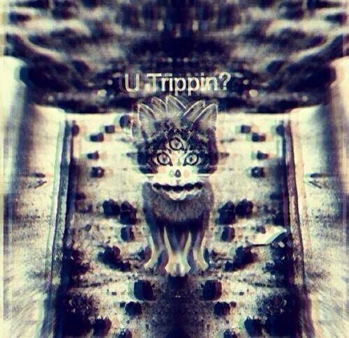 Trippy