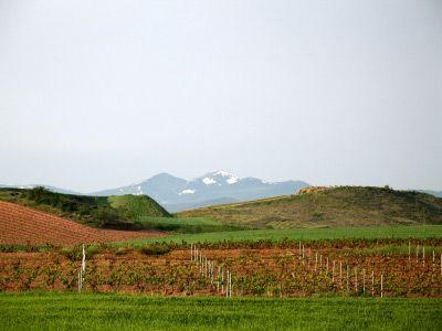 rioja wine region | Ultimate Guide to the La Rioja Wine Region
