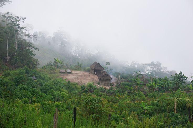 Arquitetos peruanos buscam aprender das florestas do mundo: uma viagem pela Indonésia, Camarões, Honduras e Peru